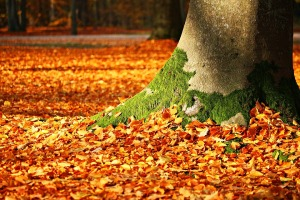 fall-foliage-1913485_960_720
